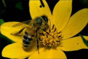 bee_with_flower